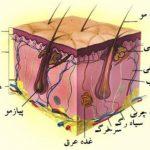مبحث پوست شناسی در آموزش میکروپیگمنتیشن فنی حرفه ای